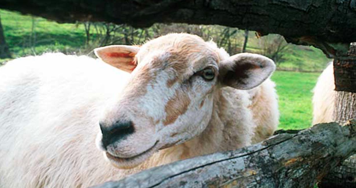 evolución producción leche de oveja