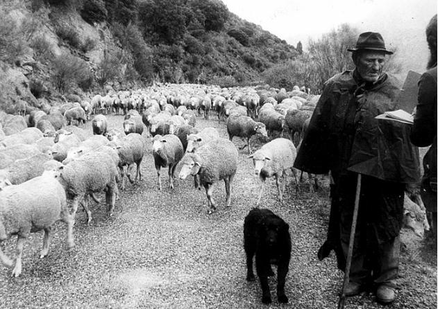 El pastoreo extensivo es una práctica tradicional