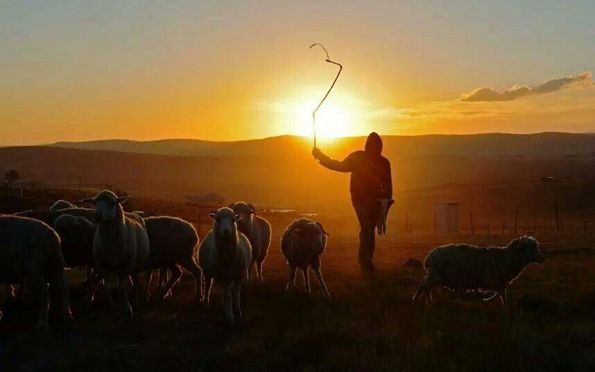 A pastores y transportistas