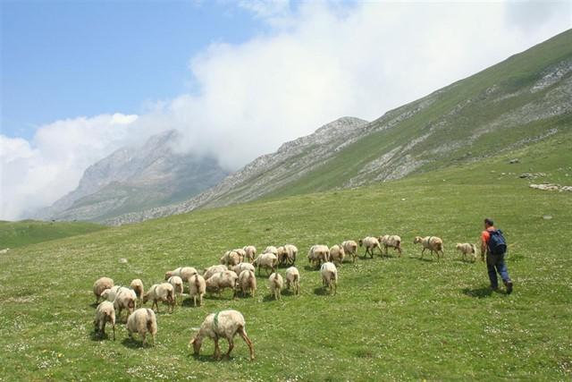 Leche ecológica, de pastoreo o de bienestar animal. ¿Sabes que son? 1