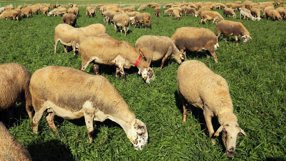 Leche ecológica, de pastoreo o de bienestar animal. ¿Sabes que son?