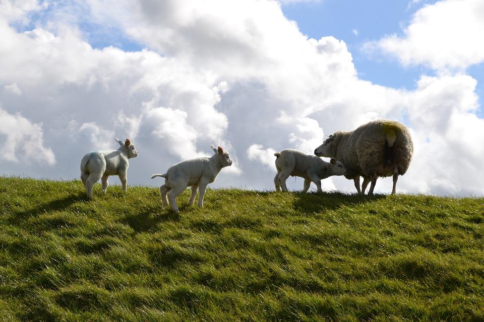 Leche ecológica, de pastoreo o de bienestar animal. ¿Sabes que son?3